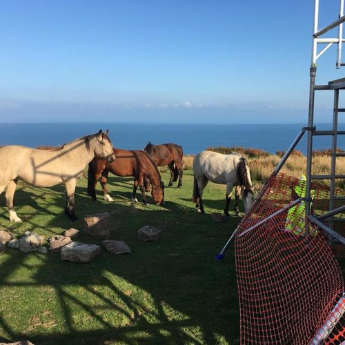Lundy Ponies on Lundy Island by Old Light Building Conservation